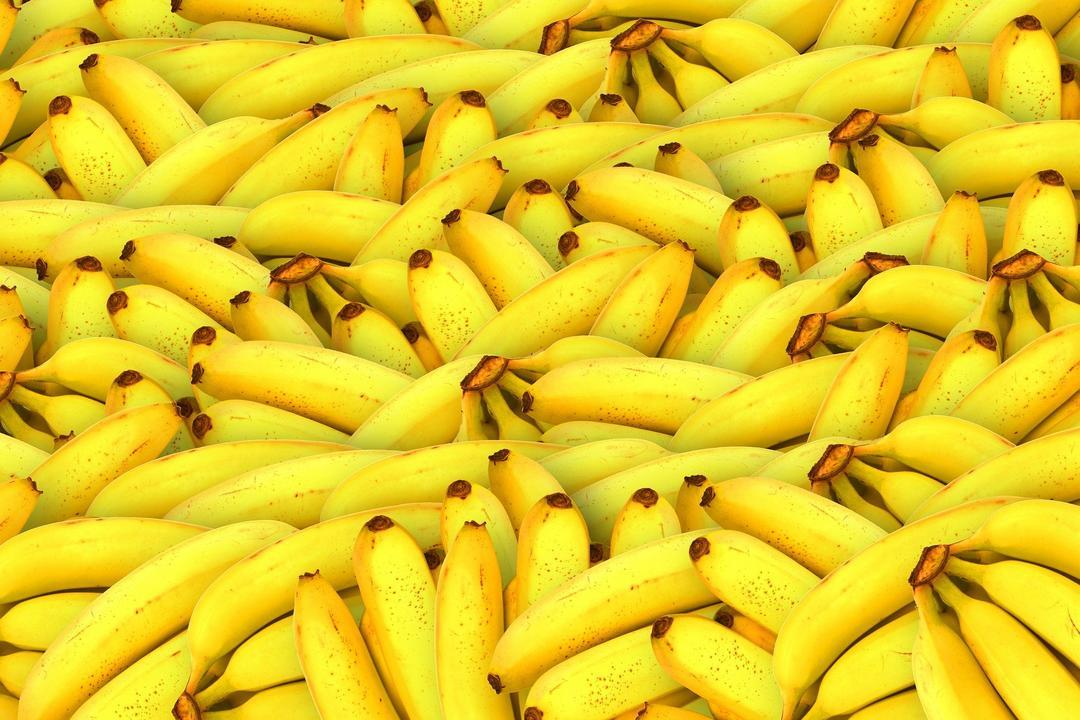 Vou plantar banana
