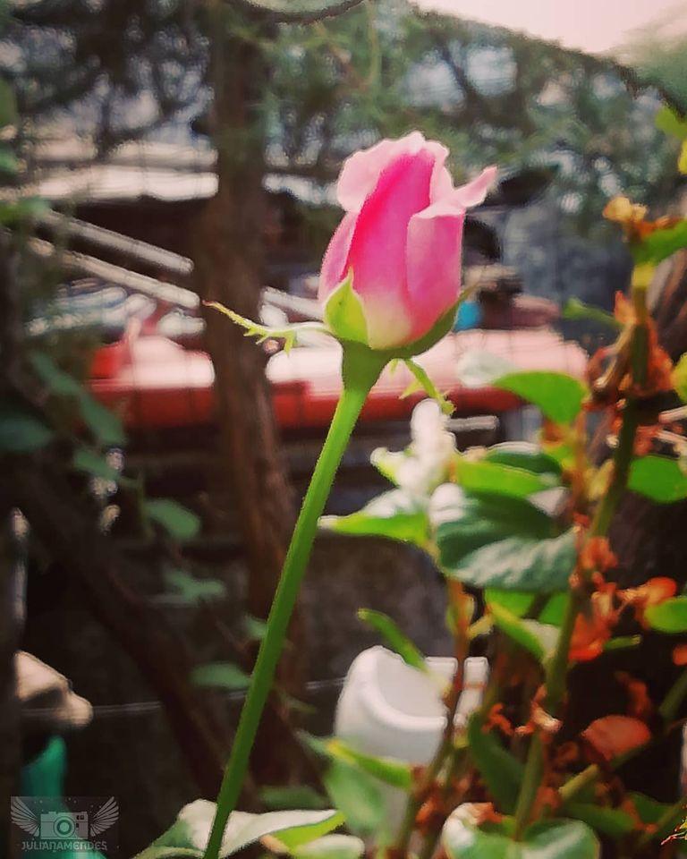 A minha flor de inspiração