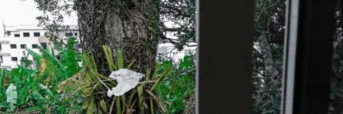 Crônica: Da minha janela