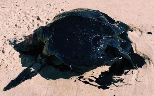 Mar de óleo